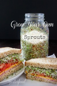 Grow Your Own Sprouts by Yesterfood