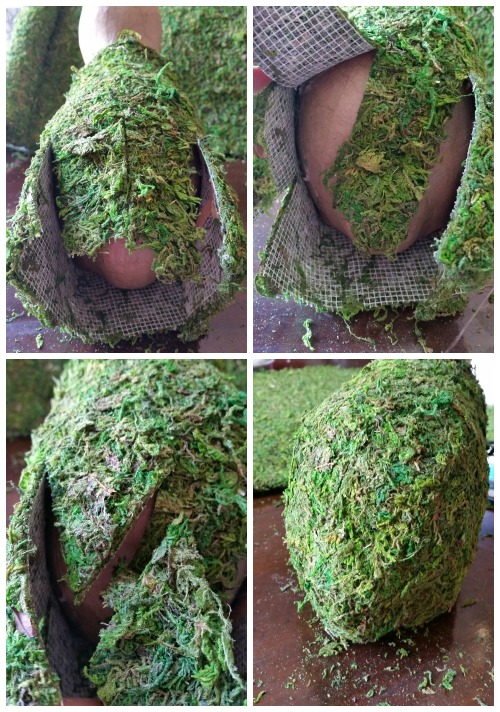 moss covered bunny bum