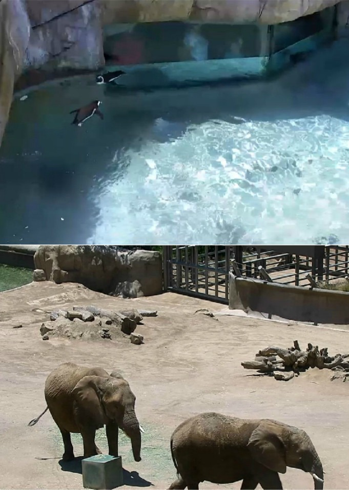 San Diego Zoo Live Cam