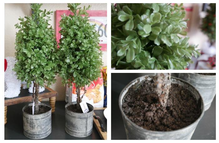 Plain boxwood cone topiary