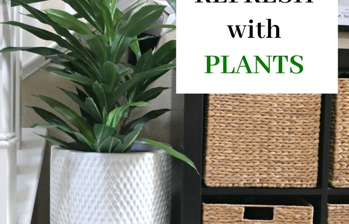 New Year Home Refresh with Plants