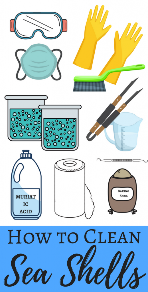 How to clean sea shells with muriatic acid