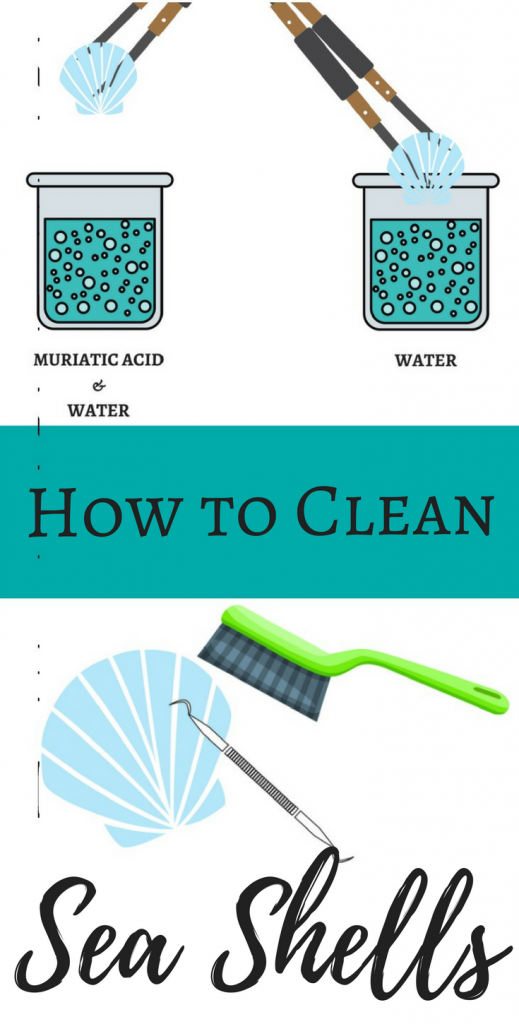 How to Clean Sea Shells with Muriatic Acid Solution & How to Neutralize and Dispose of It.
