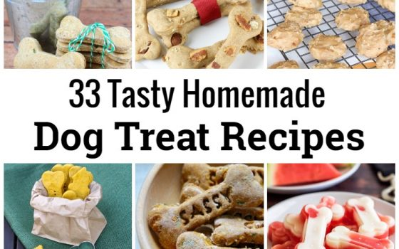 33 Tasty Homemade Dog Treat Recipes – International Dog Biscuit Appreciation Day