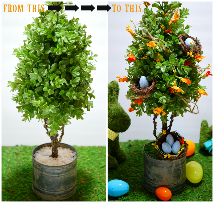 spring topiary before and after