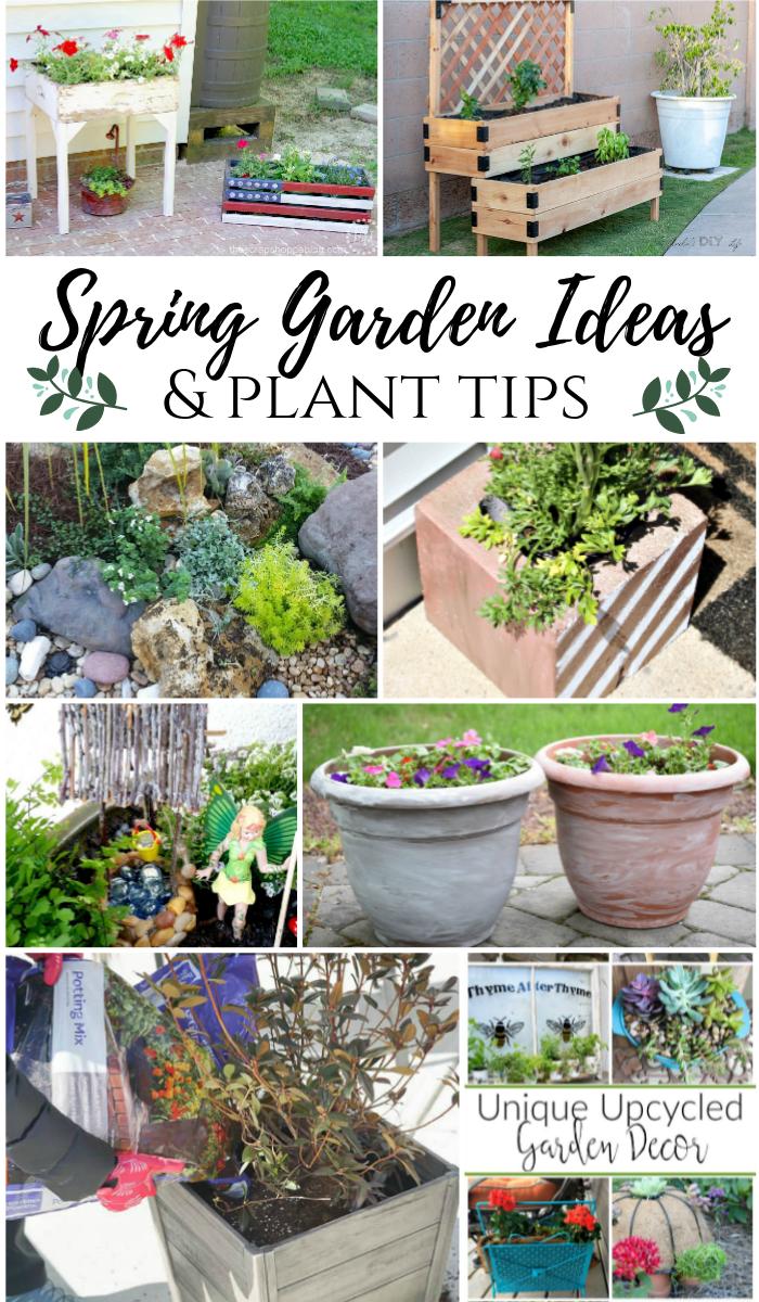 Spring Garden Ideas and plant tips