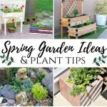 Spring Garden Ideas & Plant Tips