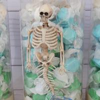 DIY Mermaid Skeleton Containers